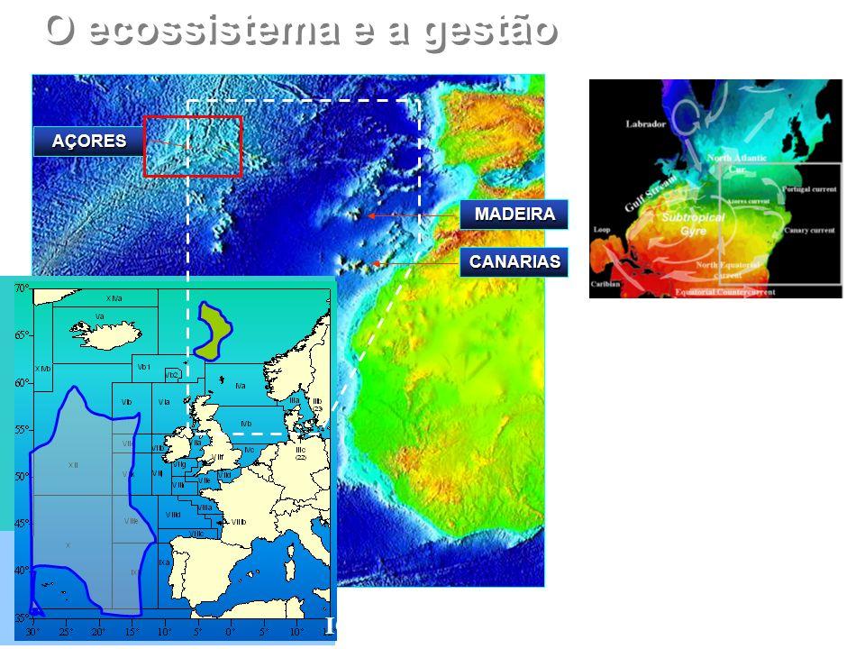 O ecossistema e a gestão AÇORES MADEIRA ICES, NEAFC, ICCAT, CECAF CANARIAS http://oceancurrents.rsmas.miami.edu/atlantic/atlantic- arrows.html