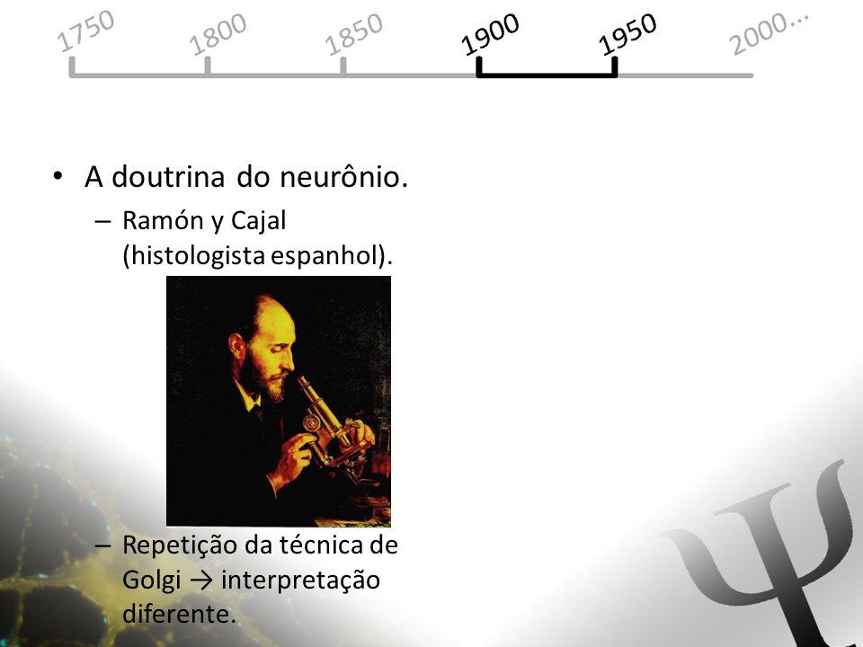 A doutrina do neurônio. – Ramón y Cajal (histologista espanhol). – Repetição da técnica de Golgi interpretação diferente.