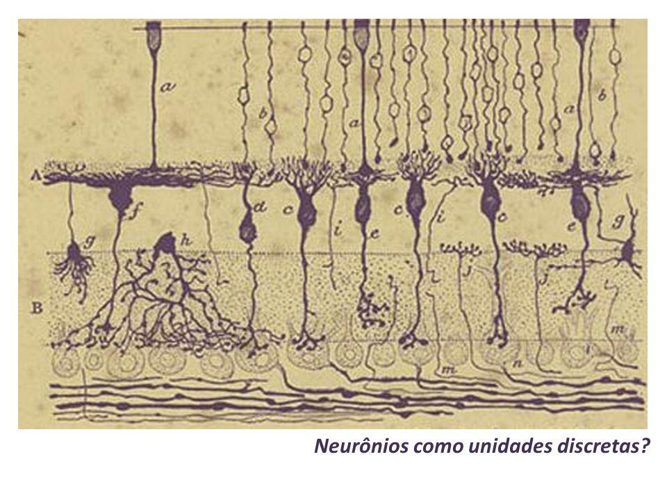 Neurônios como unidades discretas?