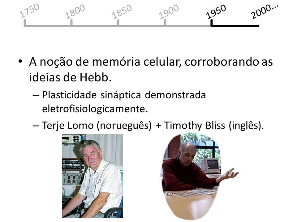 A noção de memória celular, corroborando as ideias de Hebb. – Plasticidade sináptica demonstrada eletrofisiologicamente. – Terje Lomo (norueguês) + Ti