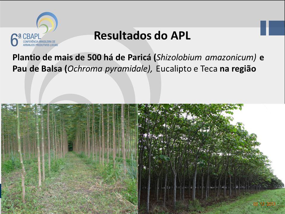 Resultados do APL Plantio de mais de 500 há de Paricá (Shizolobium amazonicum) e Pau de Balsa (Ochroma pyramidale), Eucalipto e Teca na região