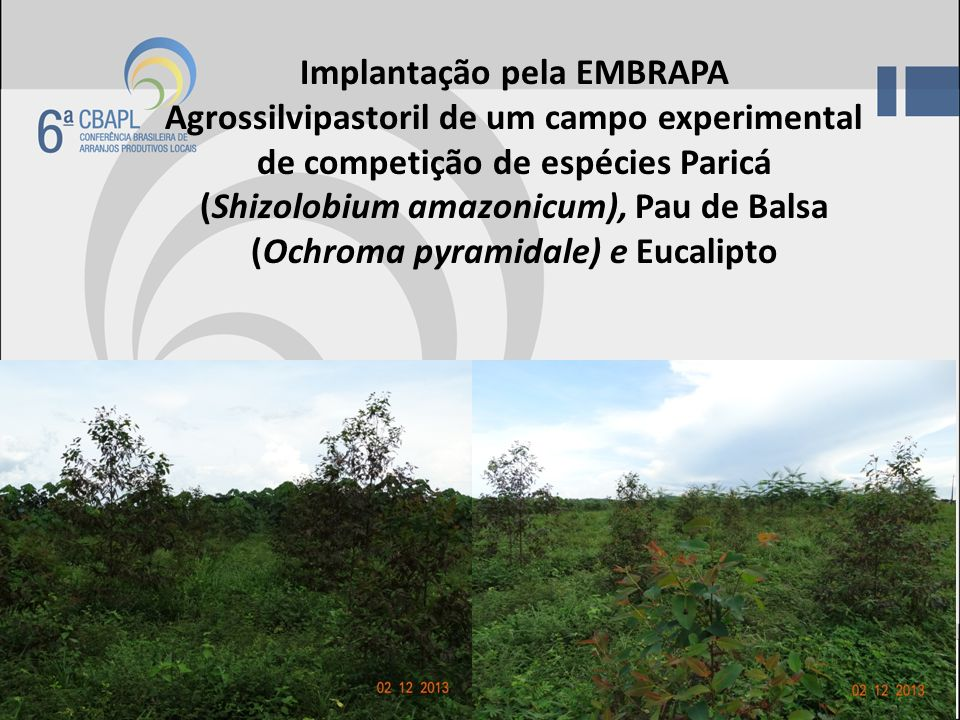 Implantação pela EMBRAPA Agrossilvipastoril de um campo experimental de competição de espécies Paricá (Shizolobium amazonicum), Pau de Balsa (Ochroma pyramidale) e Eucalipto