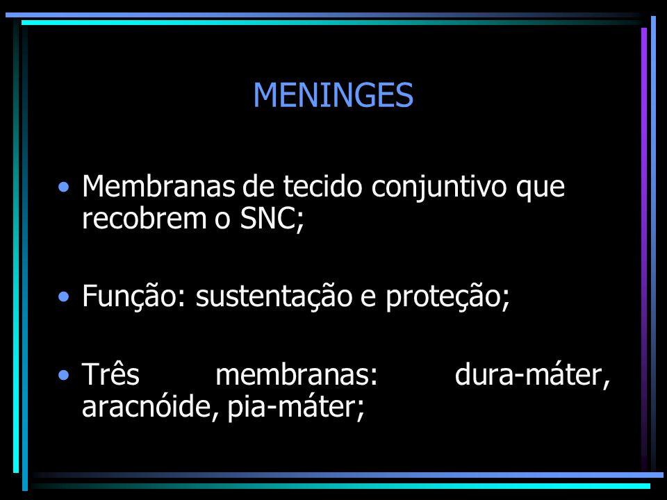 MENINGES Membranas de tecido conjuntivo que recobrem o SNC; Função: sustentação e proteção; Três membranas: dura-máter, aracnóide, pia-máter;