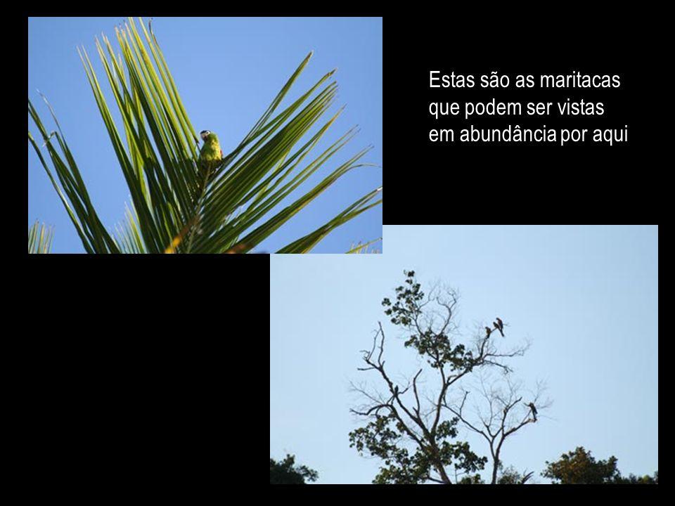 O ninho de beija-flores faz o pensamento voar imaginando como é bom sentir-se como um beija-flor: bailando no ar e voando sobre a flor...
