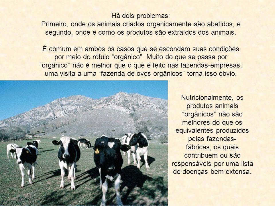 Há dois problemas: Primeiro, onde os animais criados organicamente são abatidos, e segundo, onde e como os produtos são extraídos dos animais.