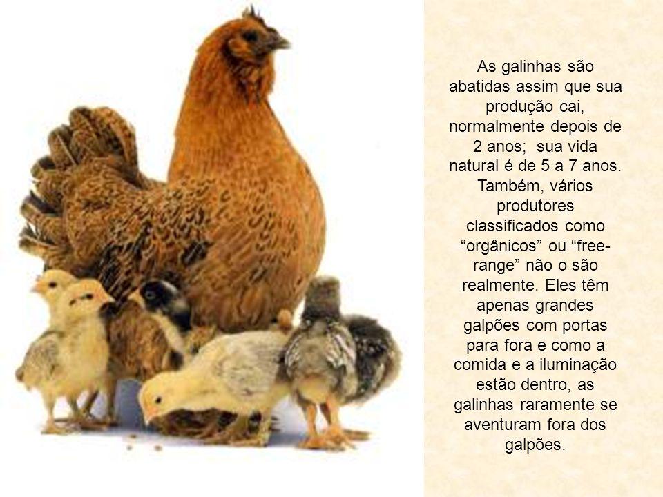 Quanto aos ovos orgânicos de galinhas criadas soltas, para obter essas galinhas poedeiras, deve-se ter ovos férteis e metade dos ovos são de pintos ma