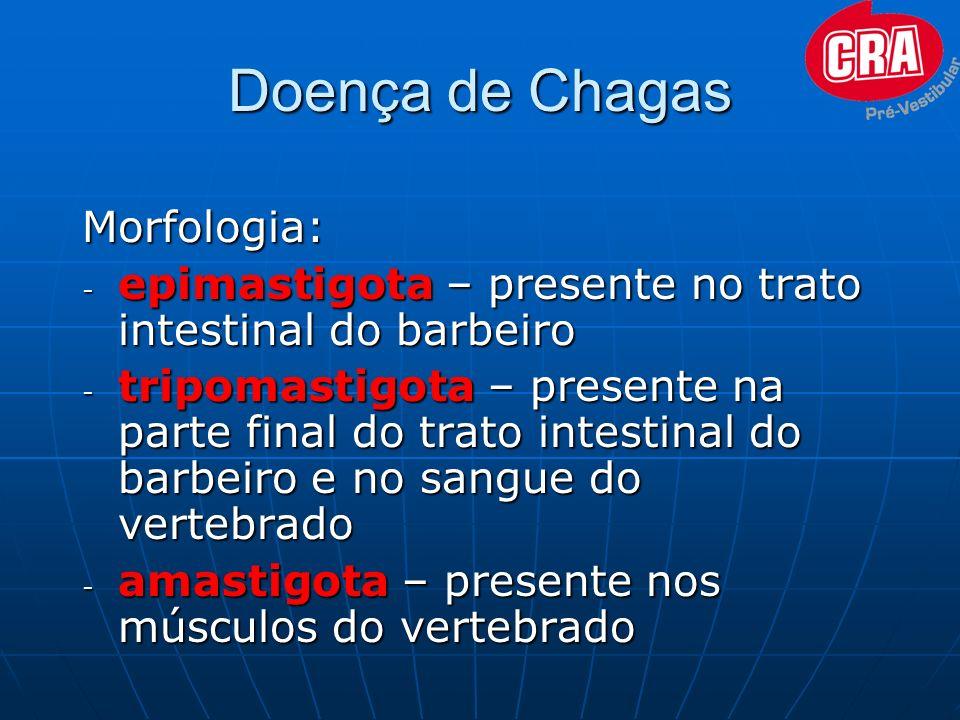 Doença de Chagas Morfologia: - epimastigota – presente no trato intestinal do barbeiro - tripomastigota – presente na parte final do trato intestinal