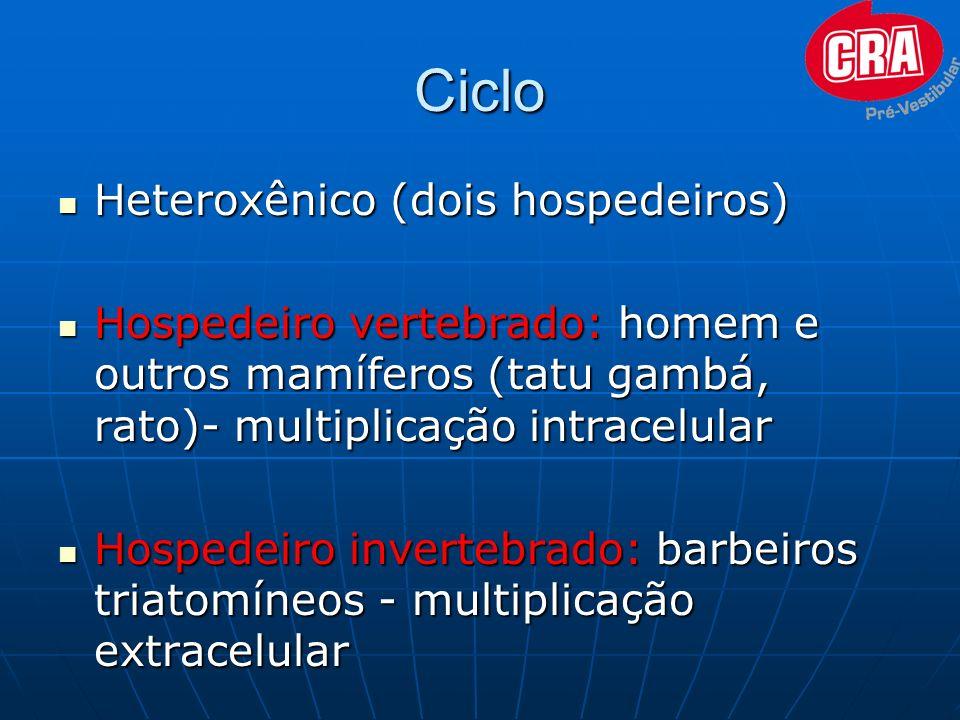 Ciclo Heteroxênico (dois hospedeiros) Heteroxênico (dois hospedeiros) Hospedeiro vertebrado: homem e outros mamíferos (tatu gambá, rato)- multiplicaçã