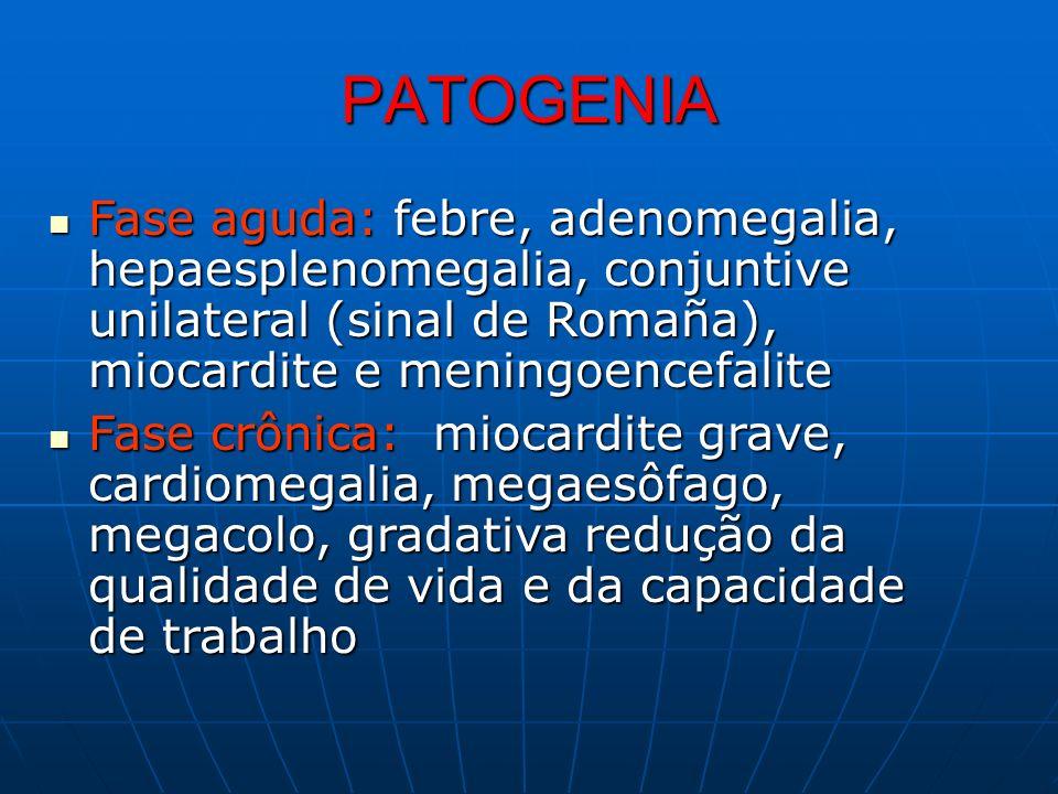 PATOGENIA Fase aguda: febre, adenomegalia, hepaesplenomegalia, conjuntive unilateral (sinal de Romaña), miocardite e meningoencefalite Fase aguda: feb