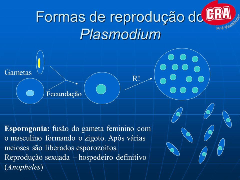Formas de reprodução do Plasmodium Fecundação R! Esporogonia: fusão do gameta feminino com o masculino formando o zigoto. Após várias meioses são libe