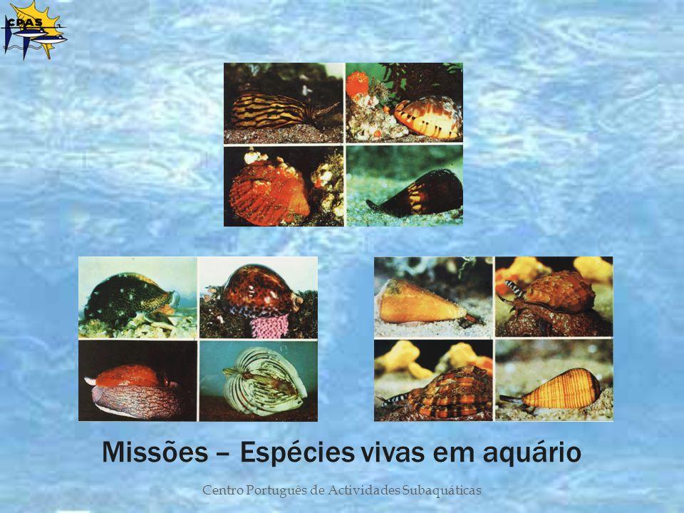 Centro Português de Actividades Subaquáticas Missões – Espécies vivas em aquário