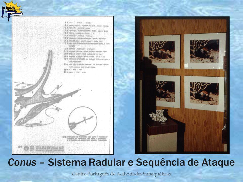 Centro Português de Actividades Subaquáticas Conus – Sistema Radular e Sequência de Ataque