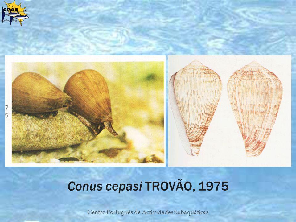 Centro Português de Actividades Subaquáticas Conus cepasi TROVÃO, 1975