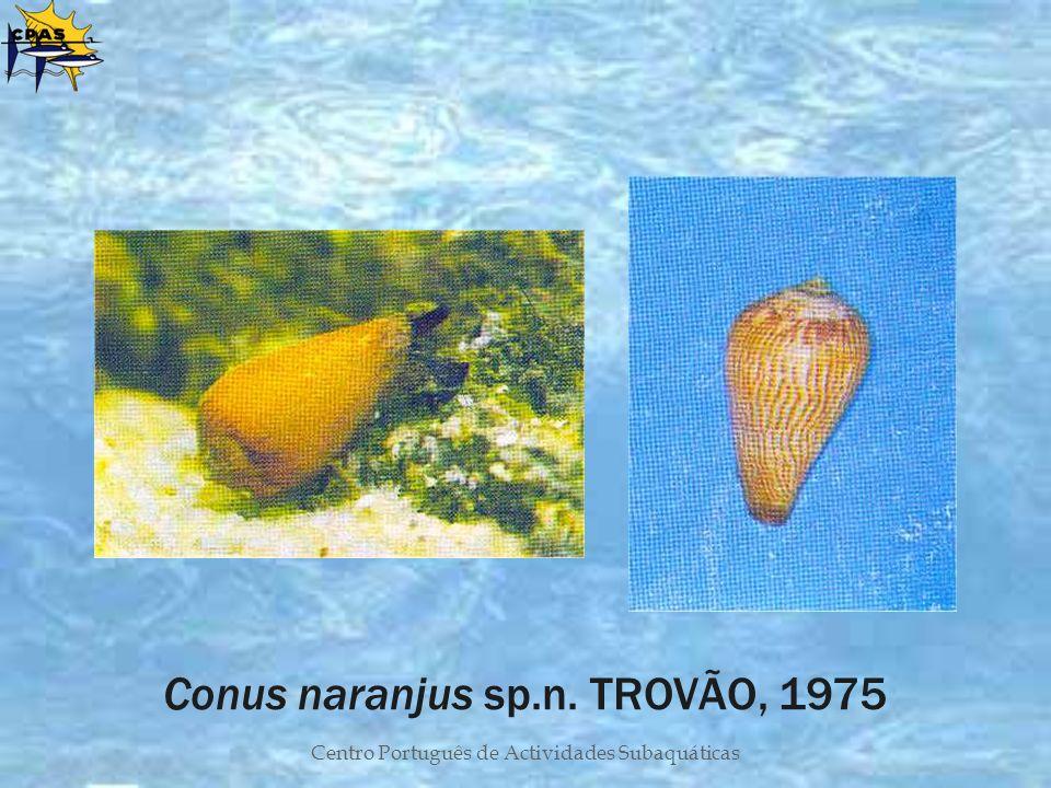 Centro Português de Actividades Subaquáticas Conus naranjus sp.n. TROVÃO, 1975