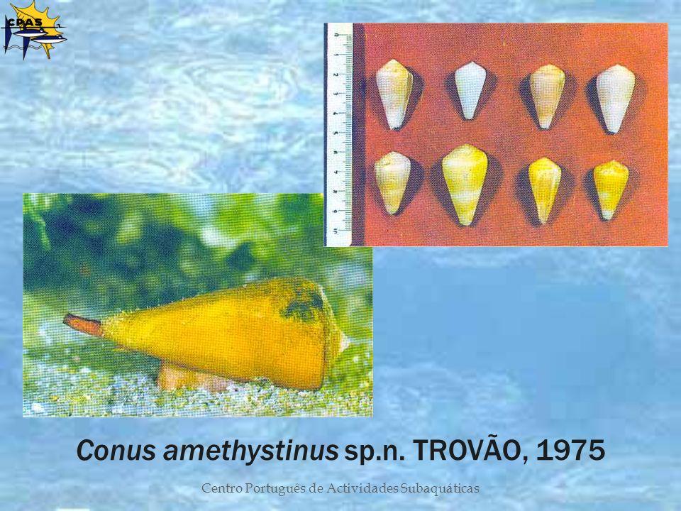 Centro Português de Actividades Subaquáticas Conus amethystinus sp.n. TROVÃO, 1975