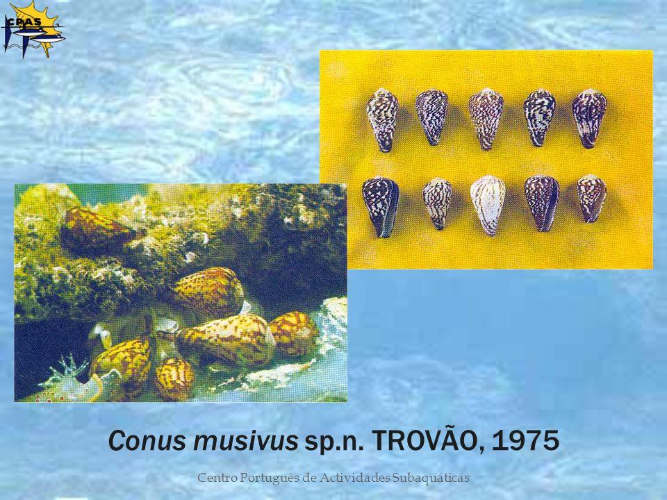Centro Português de Actividades Subaquáticas Conus musivus sp.n. TROVÃO, 1975