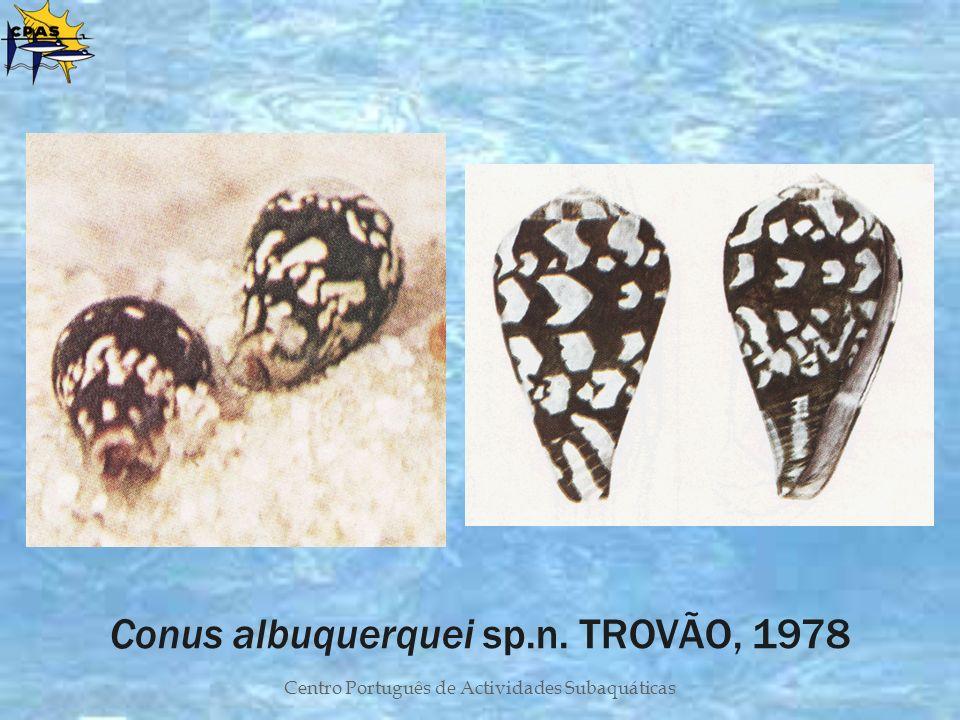 Centro Português de Actividades Subaquáticas Conus albuquerquei sp.n. TROVÃO, 1978