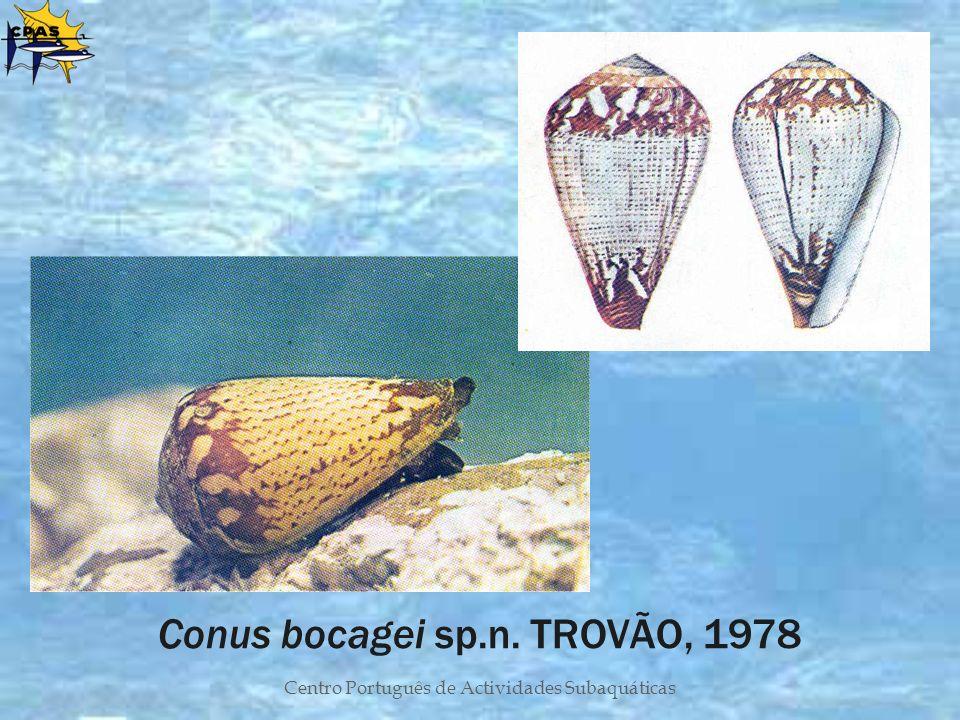 Centro Português de Actividades Subaquáticas Conus bocagei sp.n. TROVÃO, 1978