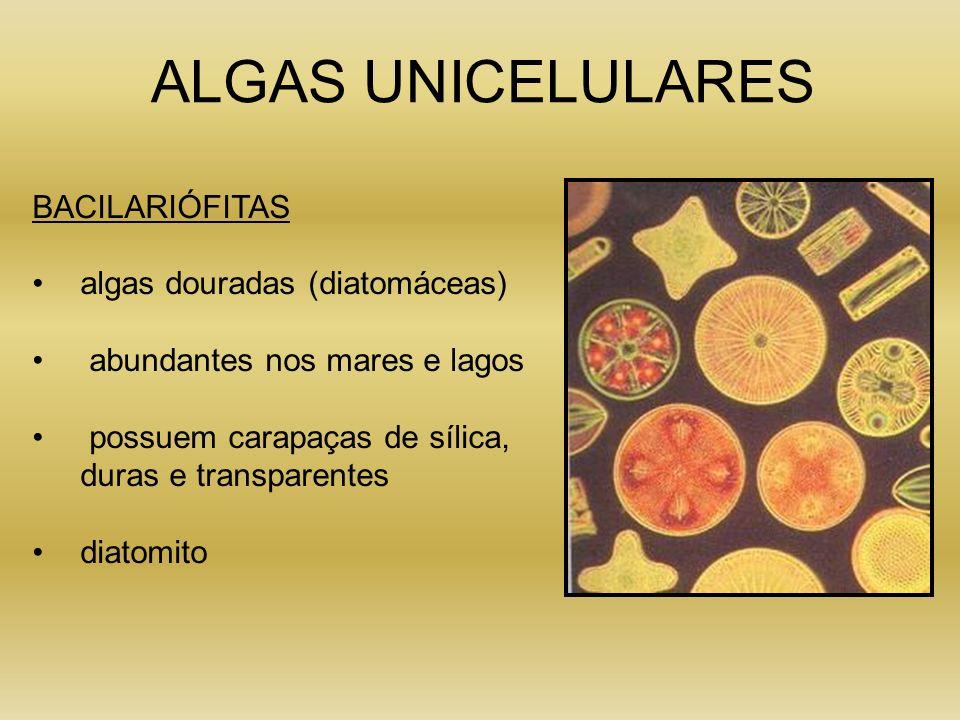 ALGAS UNICELULARES BACILARIÓFITAS algas douradas (diatomáceas) abundantes nos mares e lagos possuem carapaças de sílica, duras e transparentes diatomi