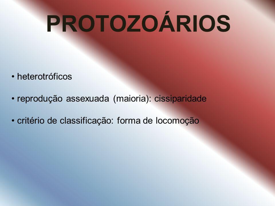 PROTOZOÁRIOS heterotróficos reprodução assexuada (maioria): cissiparidade critério de classificação: forma de locomoção