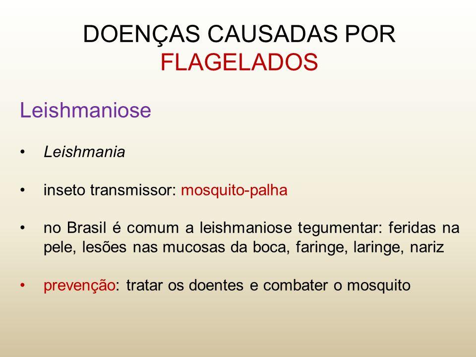Leishmaniose Leishmania inseto transmissor: mosquito-palha no Brasil é comum a leishmaniose tegumentar: feridas na pele, lesões nas mucosas da boca, f