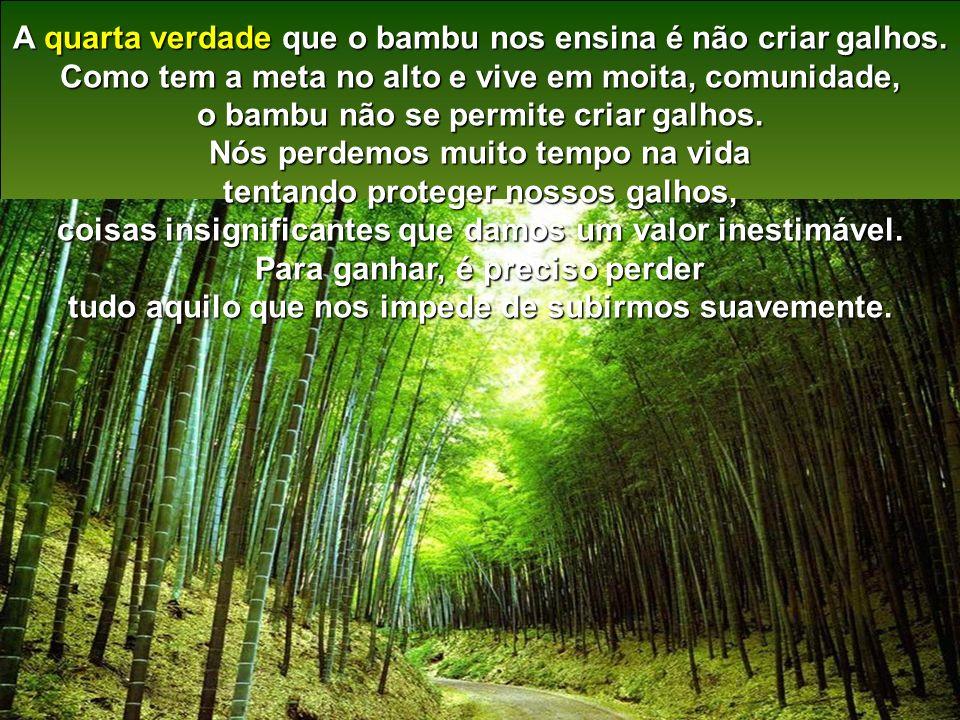 Terceira verdade: Você já viu um pé de bambu sozinho? Apenas quando é novo, mas antes de crescer ele permite que nasça outros a seu lado (como no coop