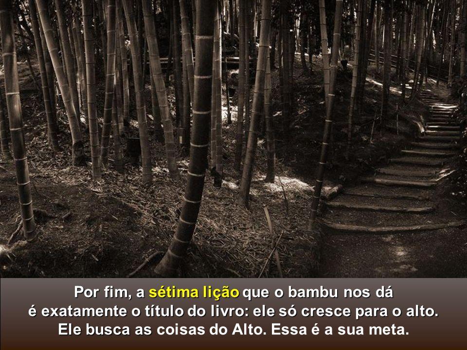 A sexta verdade é que o bambu é ôco, vazio de si mesmo. Enquanto não nos esvaziarmos de tudo aquilo que ospreenche, que rouba nosso tempo, que tira no