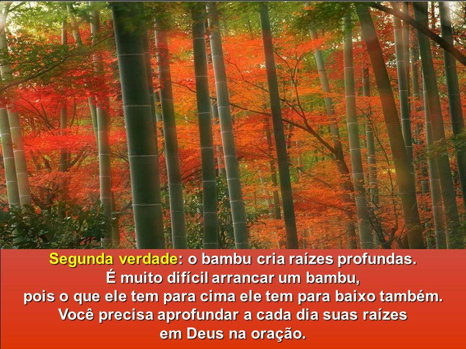 A primeira verdade que o bambu nos ensina, e a mais importante, é a humildade diante dos problemas, das dificuldades. Eu não me curvo diante do proble