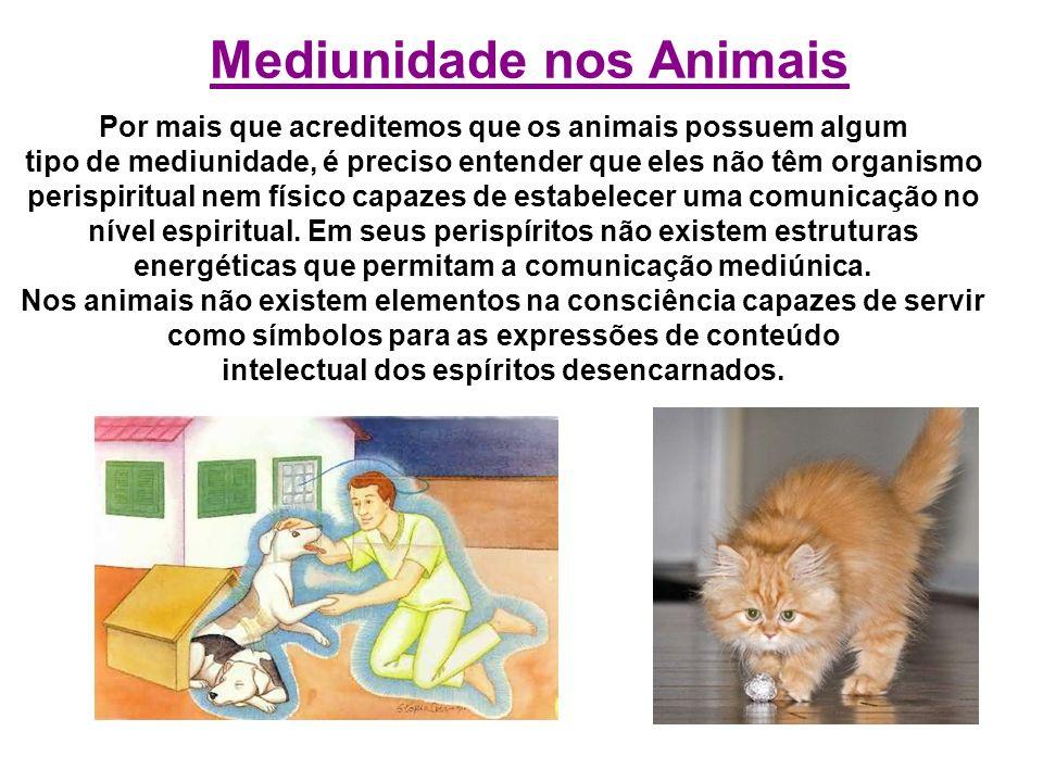 Por mais que acreditemos que os animais possuem algum tipo de mediunidade, é preciso entender que eles não têm organismo perispiritual nem físico capa