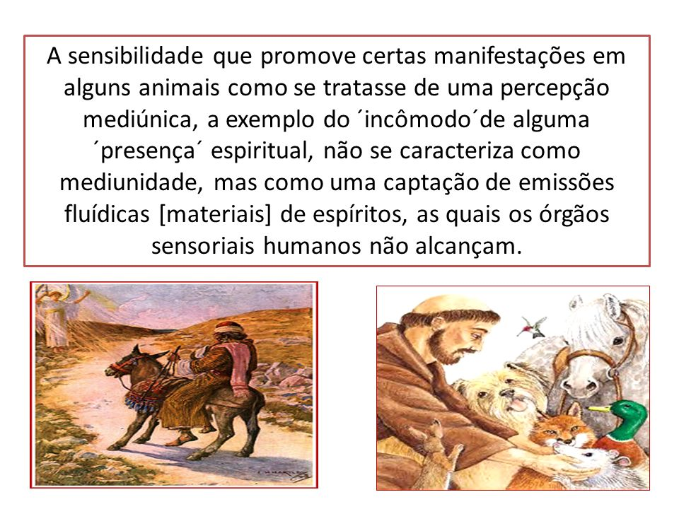 A sensibilidade que promove certas manifestações em alguns animais como se tratasse de uma percepção mediúnica, a exemplo do ´incômodo´de alguma ´pres