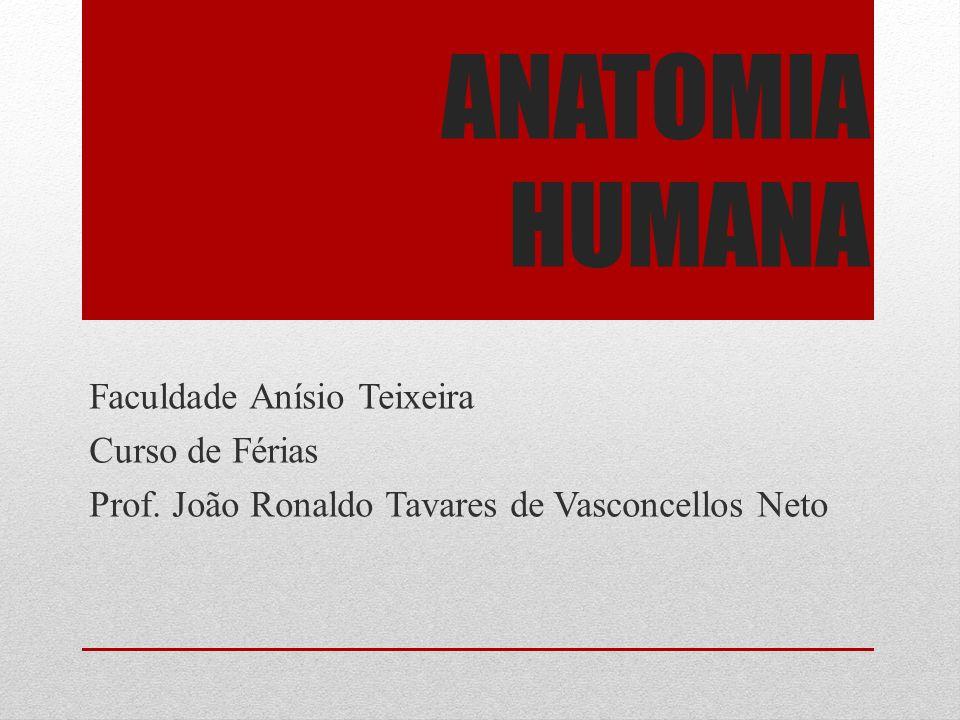 ANATOMIA HUMANA Faculdade Anísio Teixeira Curso de Férias Prof.