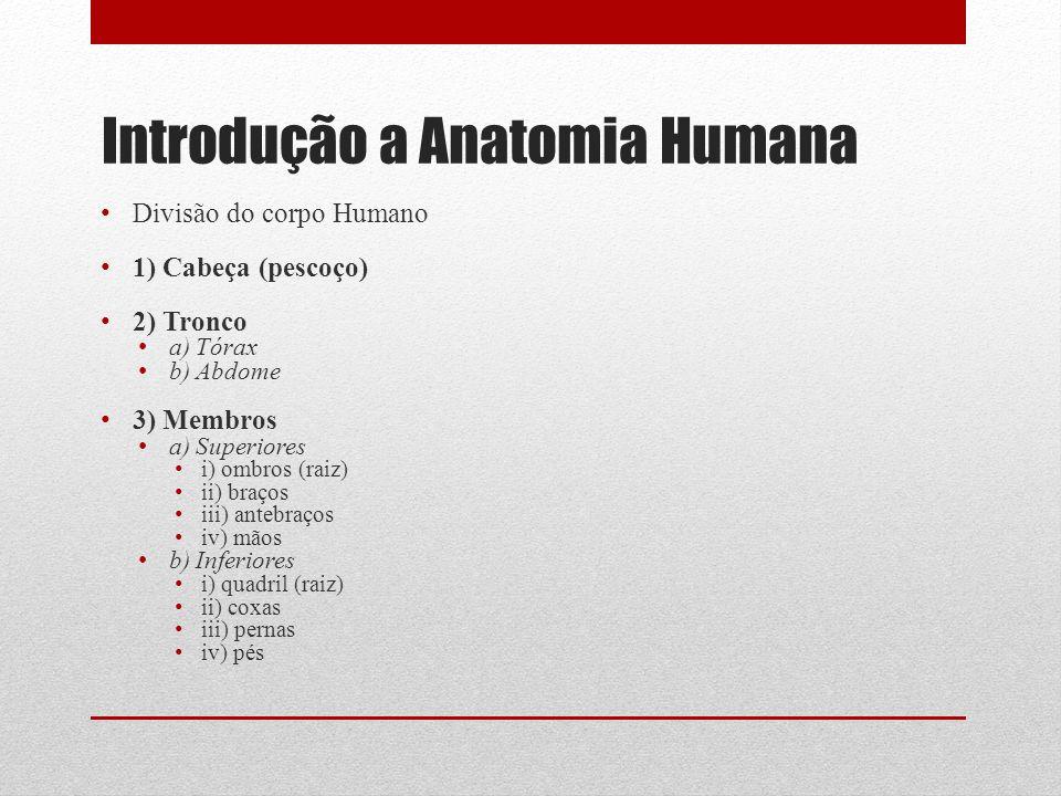 Introdução a Anatomia Humana Divisão do corpo Humano 1) Cabeça (pescoço) 2) Tronco a) Tórax b) Abdome 3) Membros a) Superiores i) ombros (raiz) ii) braços iii) antebraços iv) mãos b) Inferiores i) quadril (raiz) ii) coxas iii) pernas iv) pés