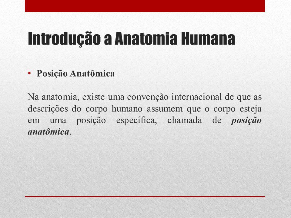 Introdução a Anatomia Humana Posição Anatômica Na anatomia, existe uma convenção internacional de que as descrições do corpo humano assumem que o corpo esteja em uma posição específica, chamada de posição anatômica.