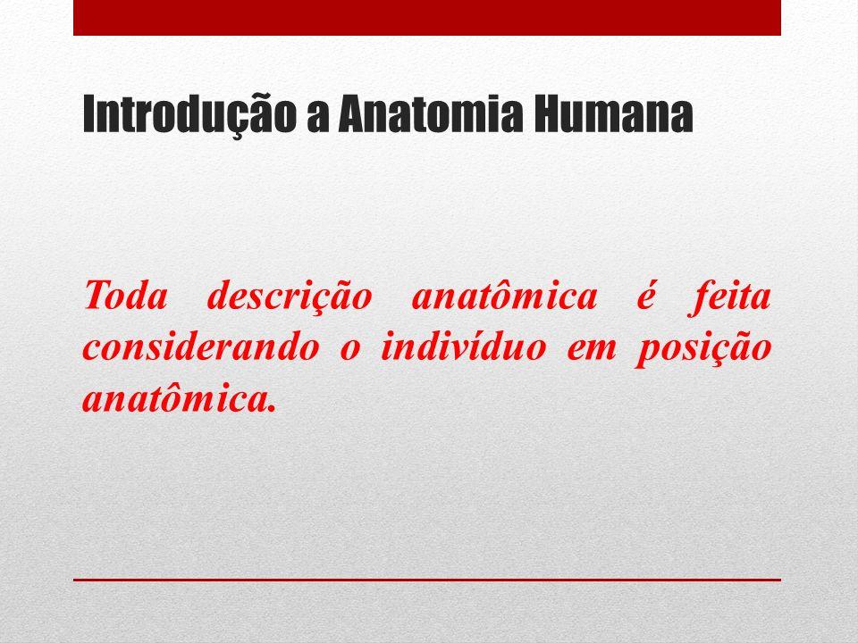 Introdução a Anatomia Humana Toda descrição anatômica é feita considerando o indivíduo em posição anatômica.
