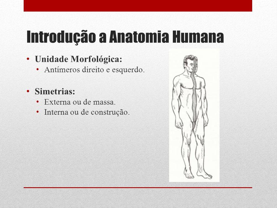 Introdução a Anatomia Humana Unidade Morfológica: Antímeros direito e esquerdo.
