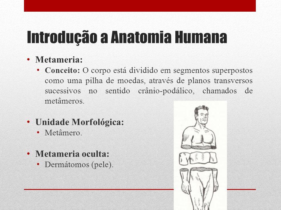 Introdução a Anatomia Humana Metameria: Conceito: O corpo está dividido em segmentos superpostos como uma pilha de moedas, através de planos transversos sucessivos no sentido crânio-podálico, chamados de metâmeros.