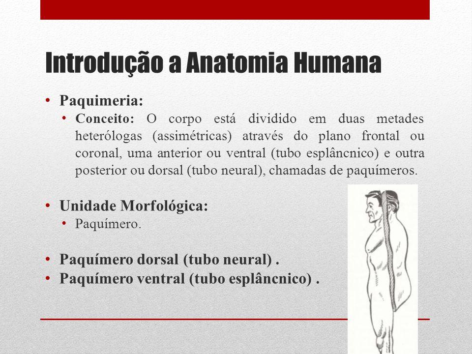 Introdução a Anatomia Humana Paquimeria: Conceito: O corpo está dividido em duas metades heterólogas (assimétricas) através do plano frontal ou coronal, uma anterior ou ventral (tubo esplâncnico) e outra posterior ou dorsal (tubo neural), chamadas de paquímeros.