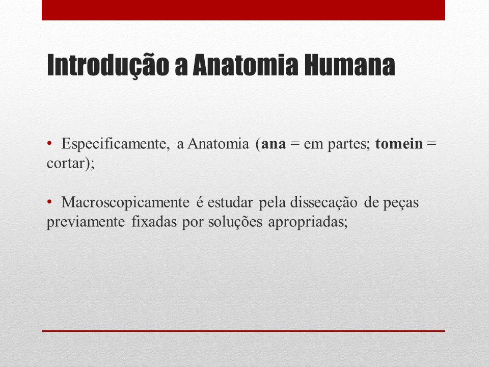 Introdução a Anatomia Humana Especificamente, a Anatomia (ana = em partes; tomein = cortar); Macroscopicamente é estudar pela dissecação de peças previamente fixadas por soluções apropriadas;