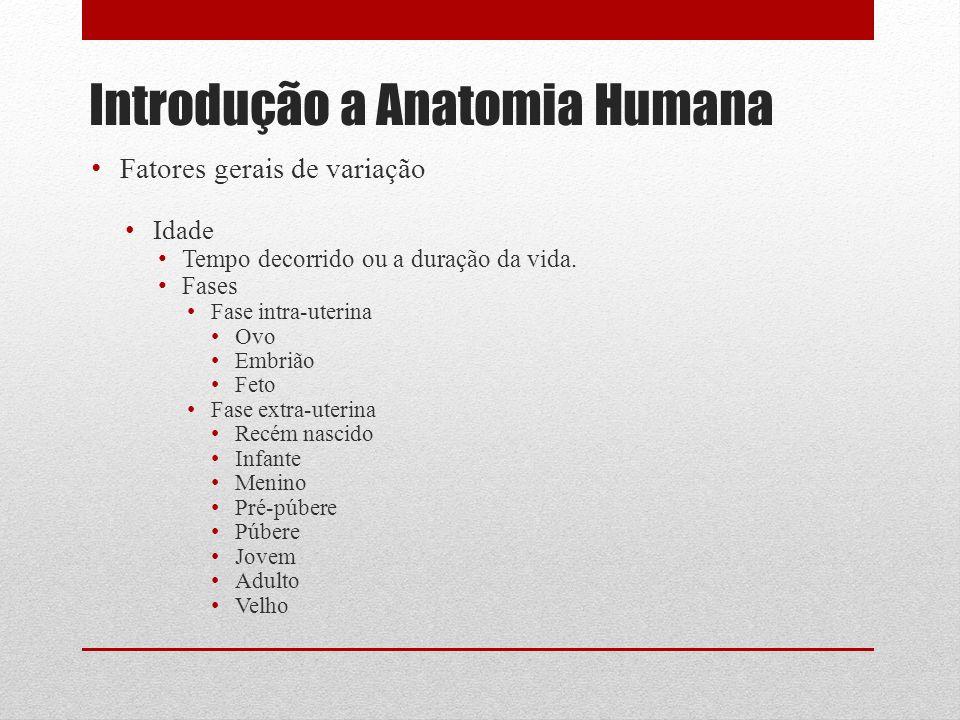 Introdução a Anatomia Humana Fatores gerais de variação Idade Tempo decorrido ou a duração da vida.
