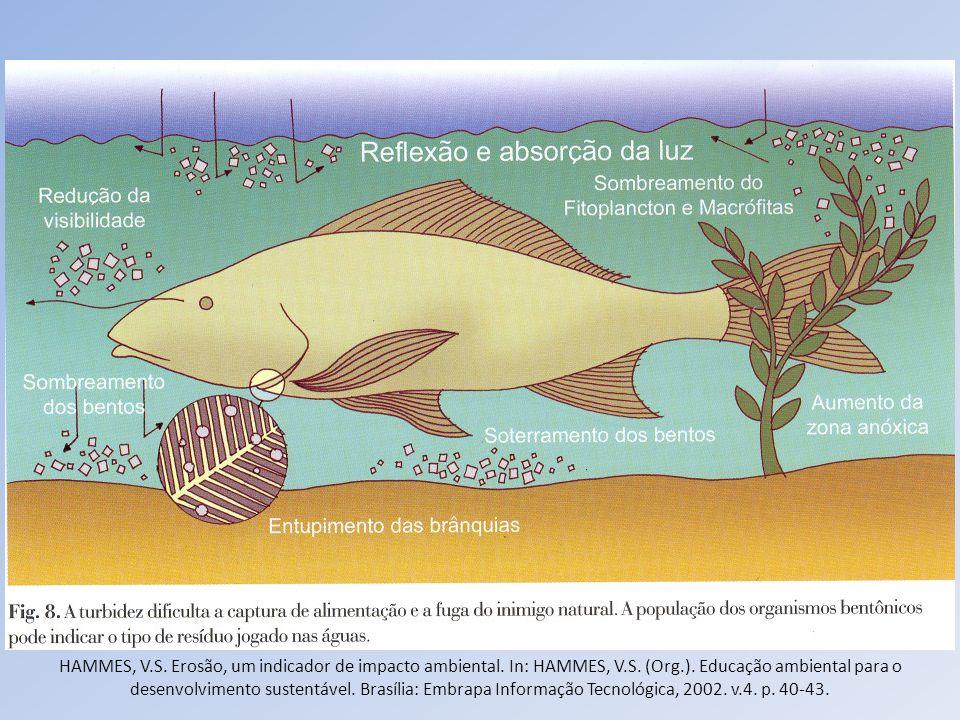 HAMMES, V.S. Erosão, um indicador de impacto ambiental. In: HAMMES, V.S. (Org.). Educação ambiental para o desenvolvimento sustentável. Brasília: Embr