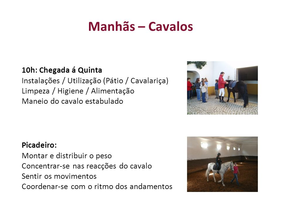 Manhãs – Cavalos 10h: Chegada á Quinta Instalações / Utilização (Pátio / Cavalariça) Limpeza / Higiene / Alimentação Maneio do cavalo estabulado Picad
