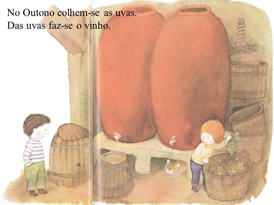 No Outono colhem-se as uvas. Das uvas faz-se o vinho.