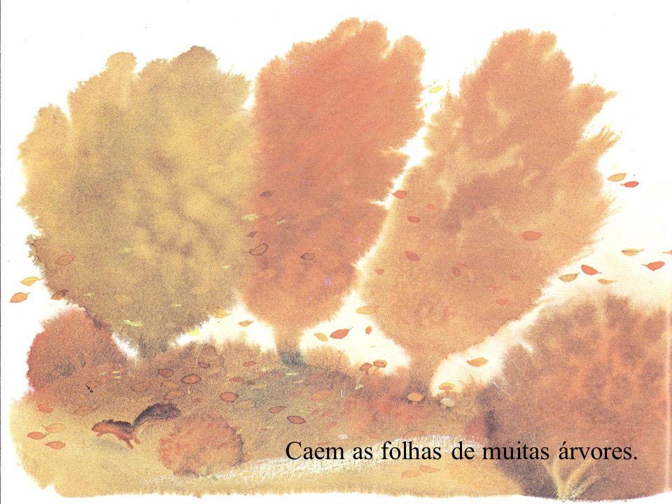 Caem as folhas de muitas árvores.