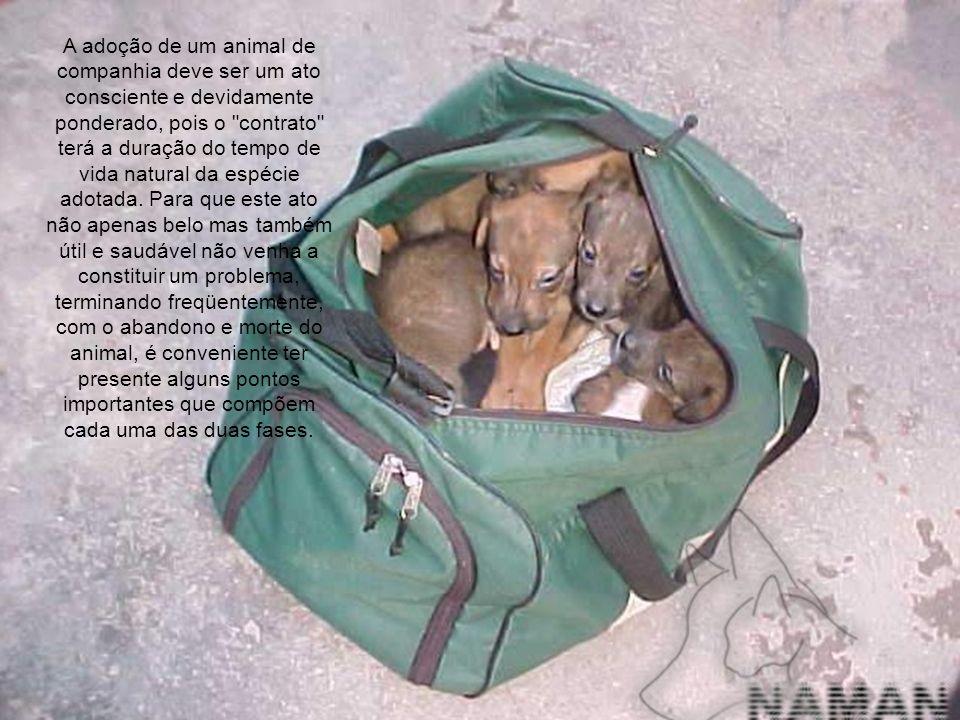 A adoção de um animal de companhia deve ser um ato consciente e devidamente ponderado, pois o contrato terá a duração do tempo de vida natural da espécie adotada.