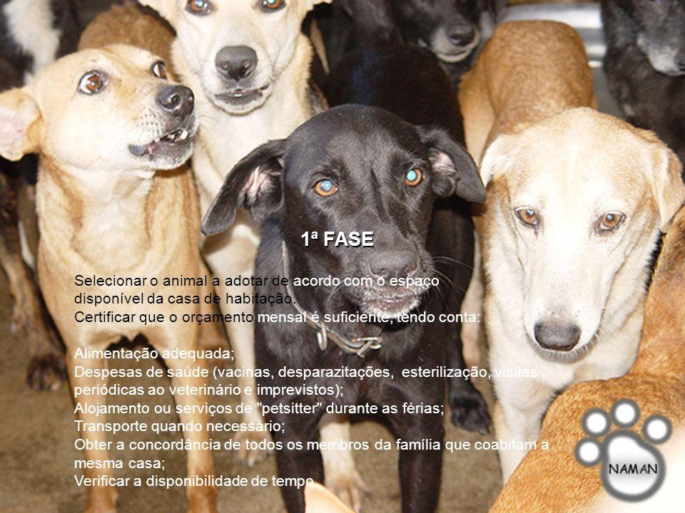 A adoção de um animal de companhia deve ser um ato consciente e devidamente ponderado, pois o