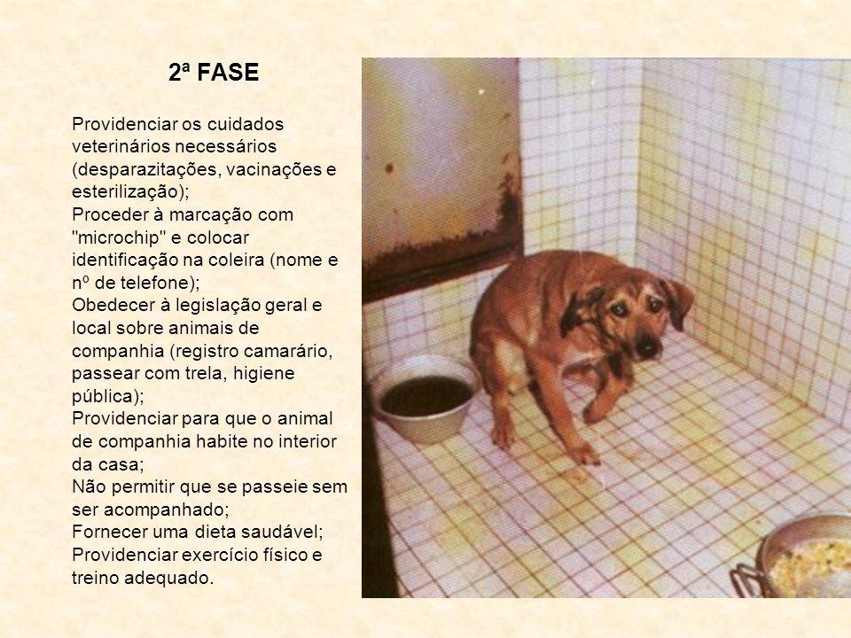 1ª FASE Selecionar o animal a adotar de acordo com o espaço disponível da casa de habitação. Certificar que o orçamento mensal é suficiente, tendo con
