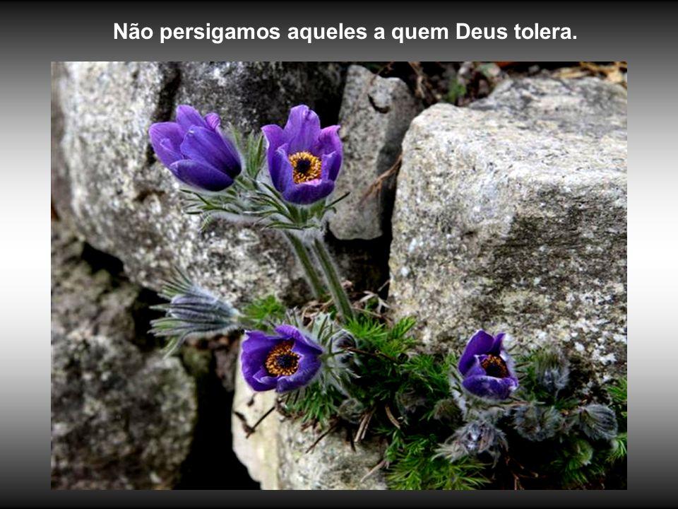 REFORMATAÇÃO e COMPILAÇÃO DOS TEXTOS: J. Meirelles celjm@uol.com.br