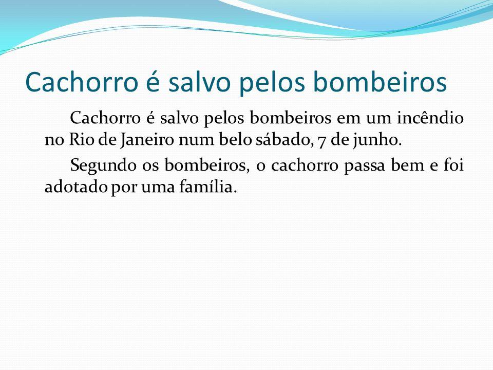 Cachorro é salvo pelos bombeiros Cachorro é salvo pelos bombeiros em um incêndio no Rio de Janeiro num belo sábado, 7 de junho. Segundo os bombeiros,