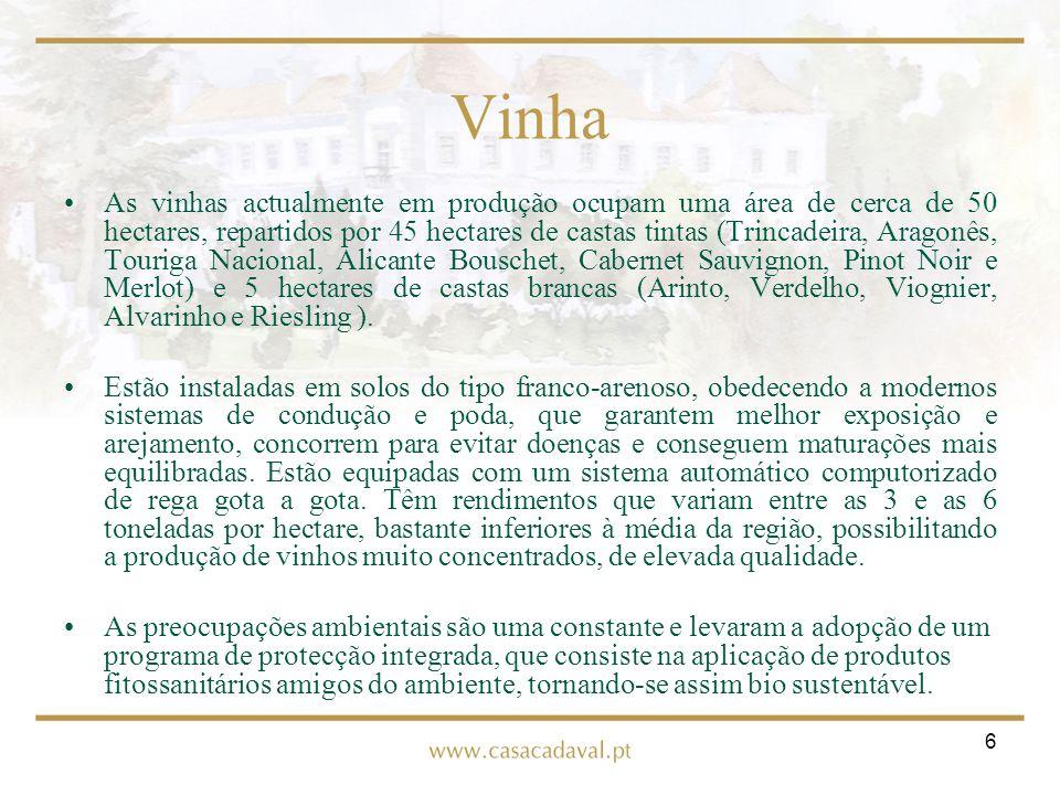 6 Vinha As vinhas actualmente em produção ocupam uma área de cerca de 50 hectares, repartidos por 45 hectares de castas tintas (Trincadeira, Aragonês,