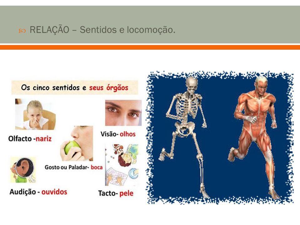 MANUTENÇÃO DA VIDA – Digestão, respiração, circulação e excreção.